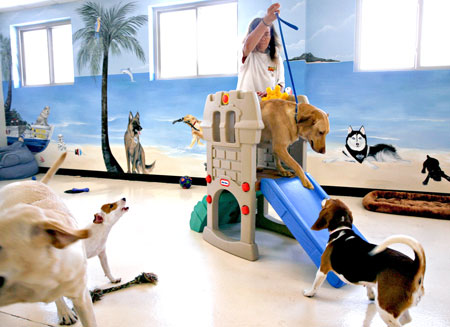 The doggy day care offers clean, cageless facilities often featuring open