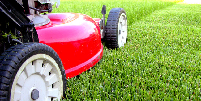Starting a Lawn Care and Landscaping Business