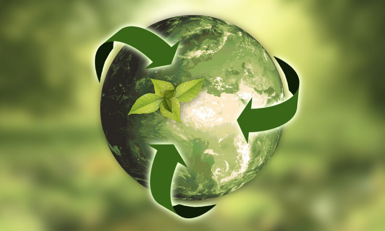 Sustainability Entrepreneurship: Expert's Guide To Living Green